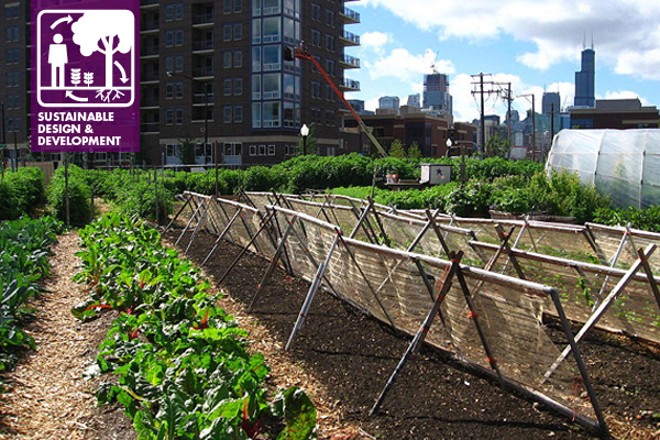 Chicago Urban Farm