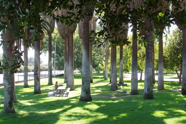 A grove of fan palms near the Japanese-American memorial on the east side of the Roeding Park in Fresno, California is one example of the many multi-tree plantings of palms. A single table and barbeque offer a quiet place for a picnic. View is southeast, with Golden State Boulevard on the left. Photographed by Chris Pattillo, September 2010. (Library of Congress, Prints & Photographs Division, HALS, HALS CA-59).