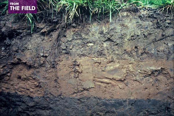 National Mall Soil in Washington, DC image: Barrett Kays
