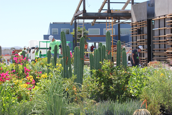 Native desert plants surround the construction site of the Arizona State University and The University of New Mexico house for the U.S. Department of Energy Solar Decathlon 2013 competition. Called SHADE (Solar Homes Adapting for Desert Equilibrium), the house's landscape will include a hummingbird and butterfly garden.  image: Carol Anna/U.S. Department of Energy Solar Decathlon