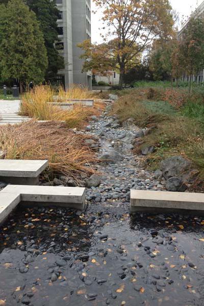 Buchanan Courtyard stormwater feature image: Dean Gregory