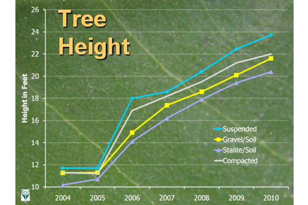 Trees growing in suspended pavement outperform those in other growing media in height.  image: E. Tom Smiley