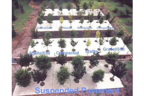 The Bartlett growing media study at 14 months. Note the size of the trees growing in suspended pavement relative to other treatment types.  image: E. Tom Smiley.