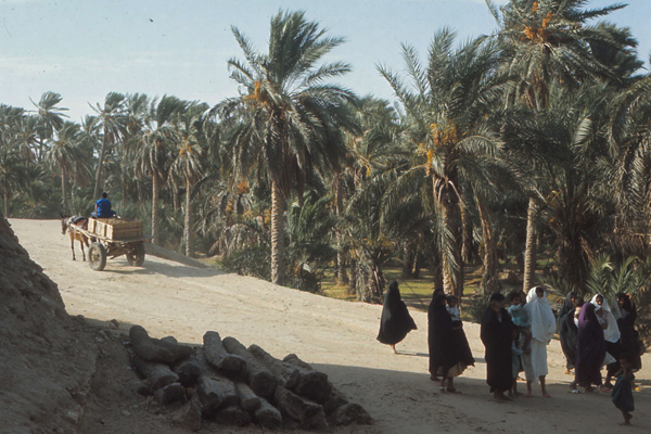 Nefta, an oasis town in southern Tunisia image: Erik Mustonen
