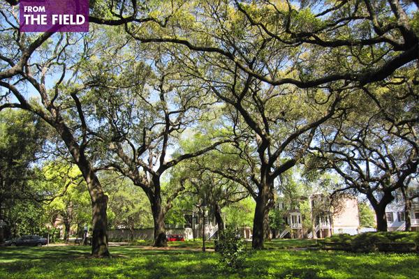 Pulaski Square in Savannah, Georgia image: Chris M. Morris via Flickr