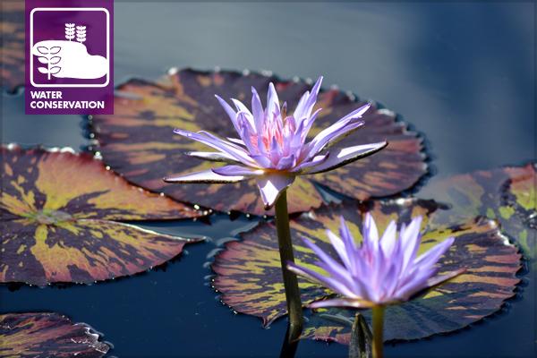 At the Denver Botanic Gardens image: Misty Faucheux via Flickr