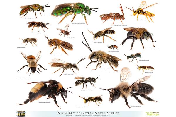 Bee Bee Designs New Jersey