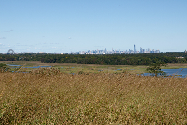 The view from Freshkills Park image: Alexandra Hay