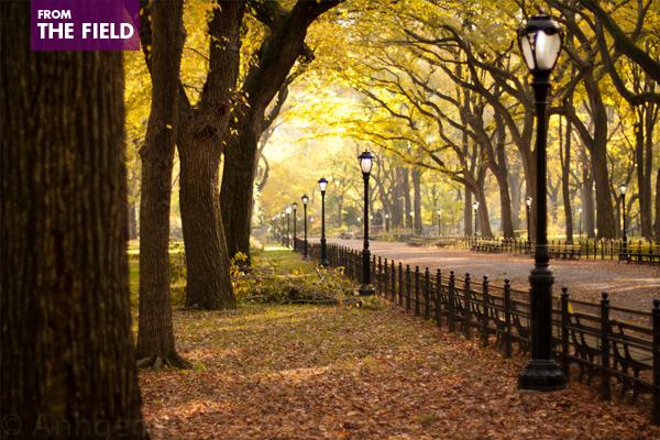 Central Park image: Anh Dinh via Flickr