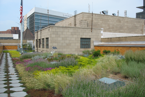 Allegheny County S Monitored Green Roof The Field