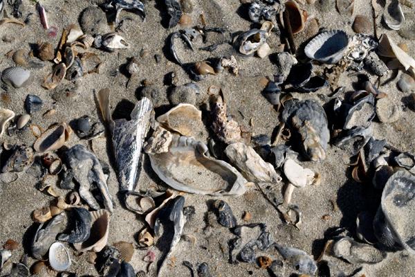 Beachcombing on Amelia Island, Florida image: Alexandra Hay