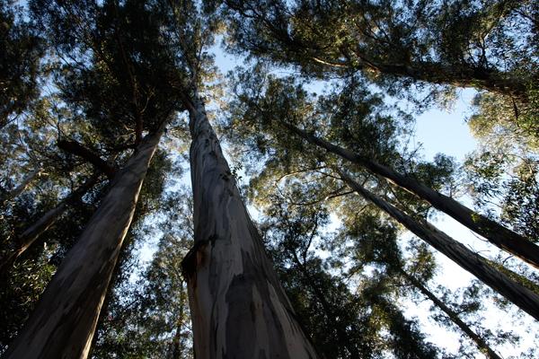 Berkeley, California image: Alexandra Hay
