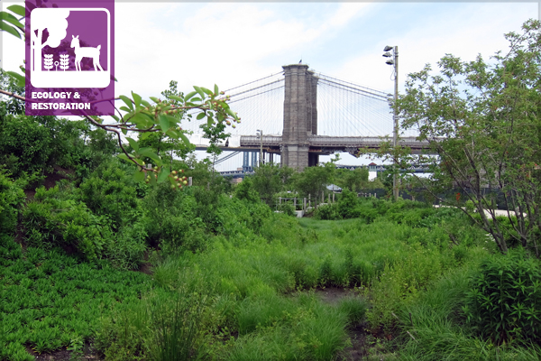 Brooklyn Bridge Park in Brooklyn, New York introduces ecological functionality into a highly urbanized environment. image: Michael Van Valkenburgh Associates project team: Michael Van Valkenburg Associates, Great Ecology