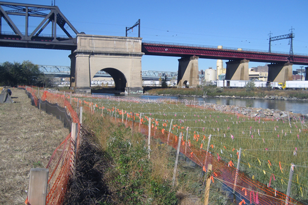 A restored tidal salt marsh on Randall's Island in New York provides habitat and water quality benefits in an urban setting. image: Great Ecology project team: RGR Landscape, Great Ecology