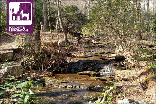 Woodland Stream image: Davie Biagi