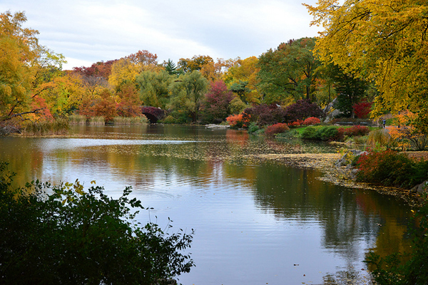 Autumn in Central Park image: Peter Miller via Flickr