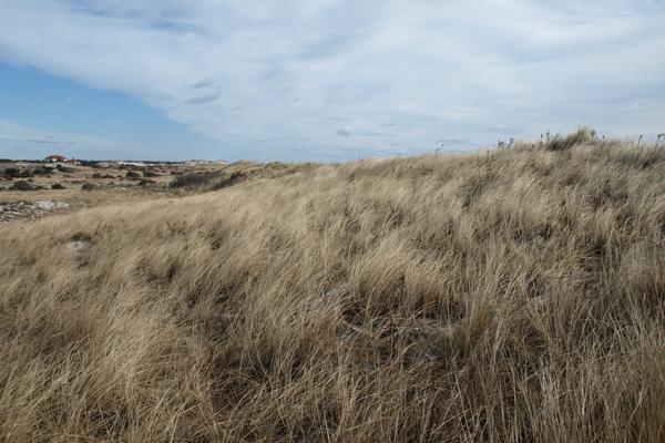 Fire Island, New York's dunes image: Alexandra Hay