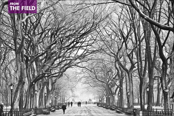 December in Central Park image: Thomas Hawk via Flickr