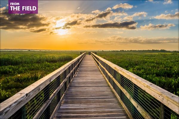 Sunrise over Paynes Prairie in Alachua County, Florida near Gainesville image: Wesley Hetrick via Flickr