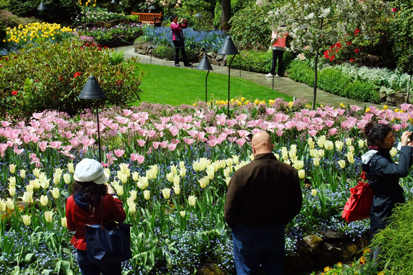 Figure 2. Butchart Gardens in May image: David Hopman