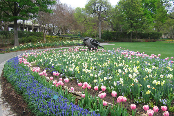 Figure 3. Dallas Arboretum, Spring display image: David Hopman