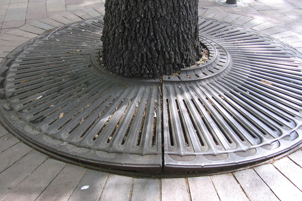 Grate damaging tree trunk and becoming a trip hazard image: James Urban
