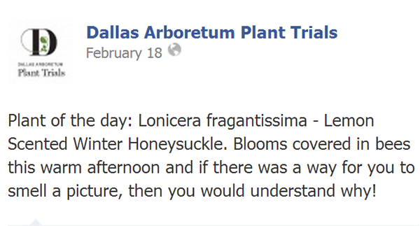Figure 4: Dallas Arboretum message promoting exotic and invasive Winter Honeysuckle image: David Hopman