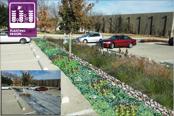 Figure 1: Design and Photoshop mockup of Sun-Juncus polyculture and low polyculture edge for bioretention structure at BRIT. Lower left shows existing plants being killed by solarization. Design and image: David Hopman