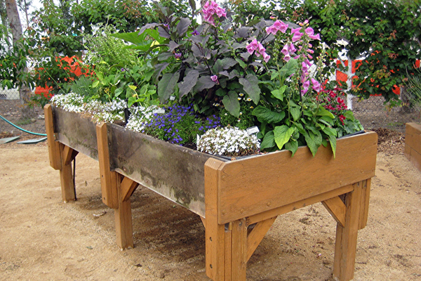 Ideal for seated and standing gardeners, this raised bed provides multiple benefits for children to learn together. image: Amy Wagenfeld