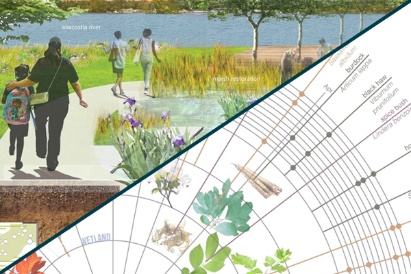 images: Jennifer Ren, Student ASLA (top left) and Rebekah Lawrence, Student ASLA (bottom right)