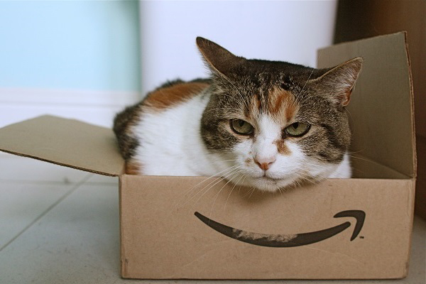 Cat inside Amazon box