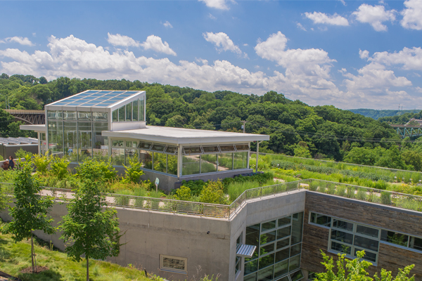 CSL's green roof