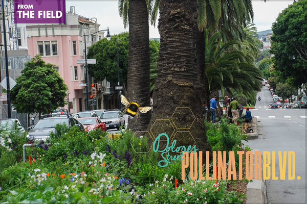Dolores Street Pollinator Boulevard in San Francisco